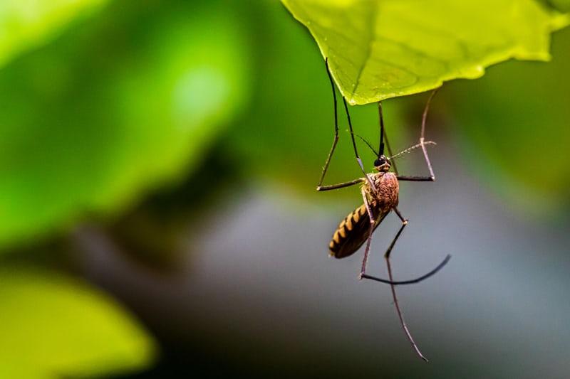 滅蚊救星!人工智慧一秒讓蚊子現行,讓你安心一覺到天亮