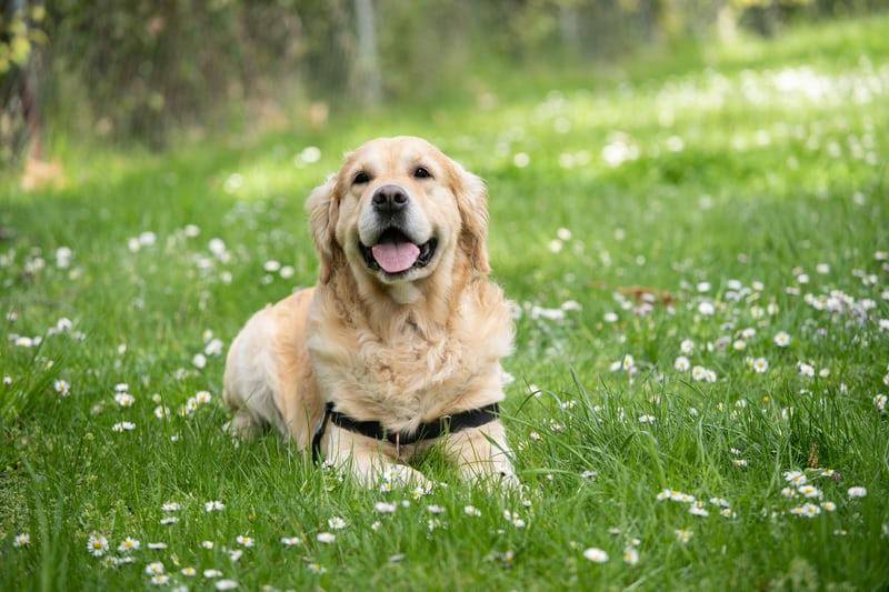 利用真狗培訓人工智慧狗狗,打造未來新寵物(下)
