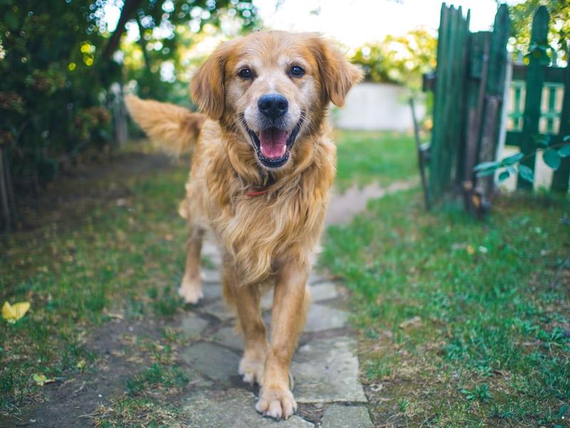 利用真狗培訓人工智慧狗狗,打造未來新寵物(上)