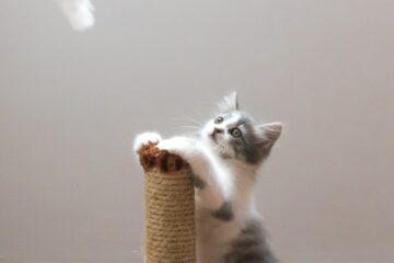 貓奴救星!亞馬遜開發人工智慧防止愛貓帶伴手禮給你!
