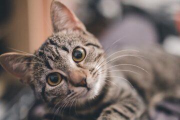 人工智慧各種噴飯命名:貓咪篇