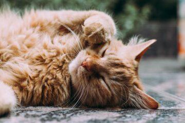 人工智慧貓砂盆:1.研發的背後竟暗藏不為人知的辛酸