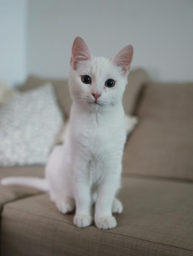 人工智慧貓砂盆:2.8成貓咪死因與排泄有關