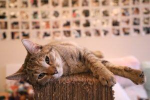 人工智慧貓砂盆:3.三大核心技術把關貓咪健康