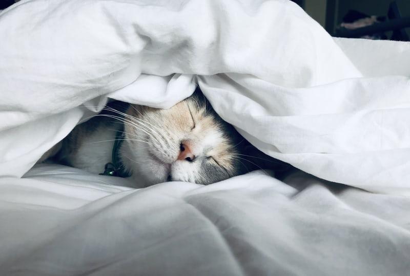 人工智慧也需要睡眠?研究證實:是真的(上)