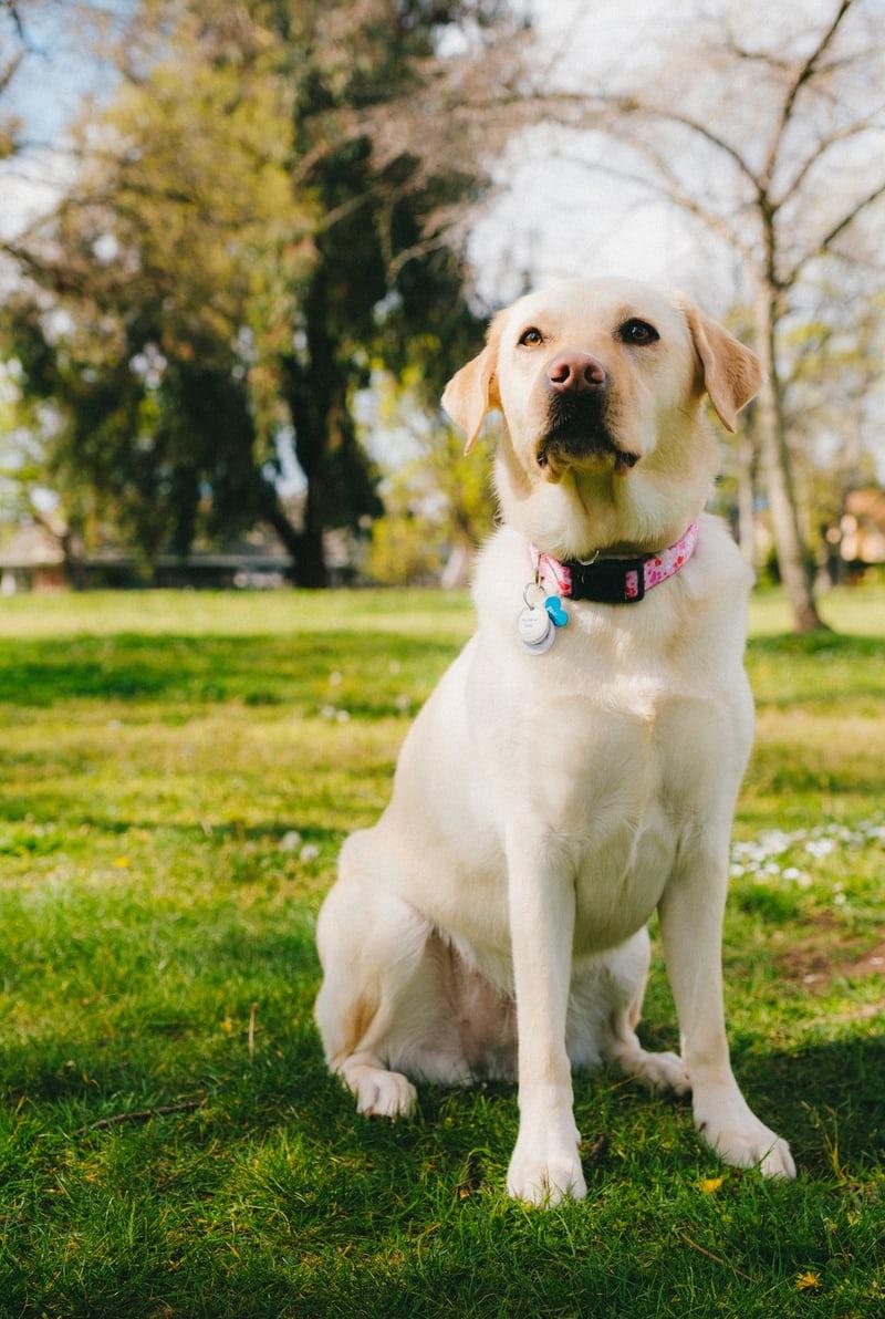 美研發 AI 機器導盲犬,為視障朋友領路
